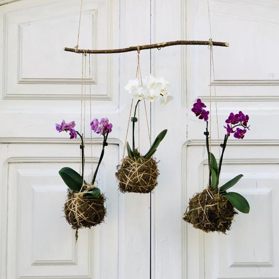 Imagem de Kokedama de Mini Orquídea (unidade)