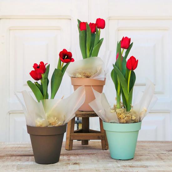 Imagem de Vaso de Tulipa