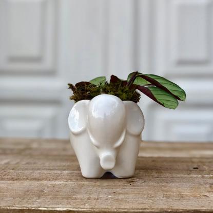 Imagem de Baby Elephant