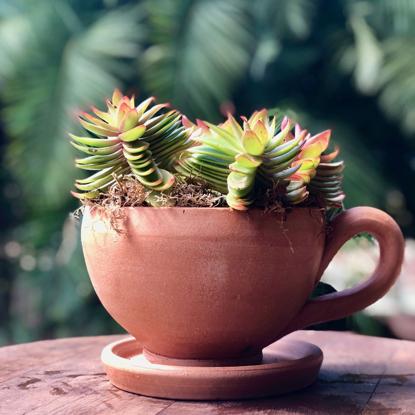Imagem de Big Succulent Tea Cup