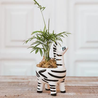 Imagem de Deu Zebra